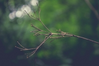 Dried twig with greenery in the background
