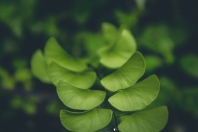 Green plant soft focus