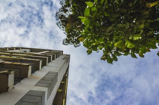 Tall skyscraper next to a tree