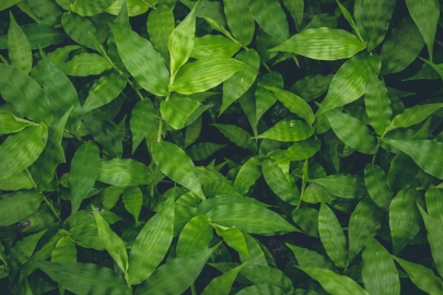Top view of green plants growing background